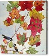 Birds On Maple Tree 6 Acrylic Print