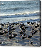 Birds On The Beach Acrylic Print
