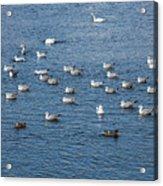 Birds On The Water Acrylic Print