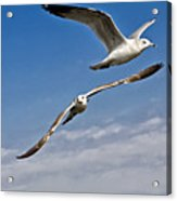 Birds On The Wing Acrylic Print