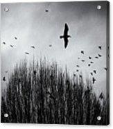Birds Over Bush Acrylic Print
