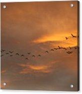 Birds Over San Miguel De Allende Acrylic Print