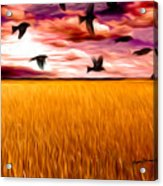 Birds Over Wheat Field Acrylic Print by Anthony Caruso