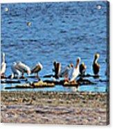 Birds Panorama Acrylic Print