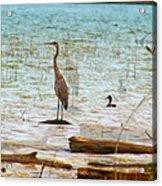 Birds Reflections Acrylic Print