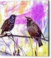 Birds Stare Nature Songbird  Acrylic Print