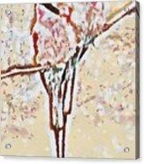 Bird's Views Acrylic Print