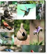 Birdsong Nature Center Collage Acrylic Print