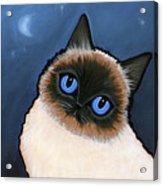 Birman Blue Night Acrylic Print by Leanne Wilkes