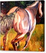 Birthday Poney Acrylic Print