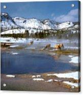 Biscuit Basin Elk Herd Acrylic Print