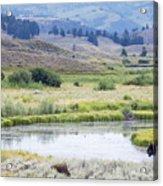 Bison At Slough Creek Acrylic Print