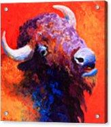Bison Attitude Acrylic Print