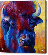 Bison Boss Acrylic Print by Marion Rose