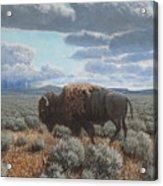 Bison Bull on the prairie Acrylic Print