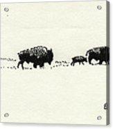 Bison Family Acrylic Print