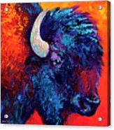 Bison Head Color Study II Acrylic Print