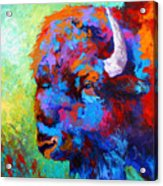 Bison Head II Acrylic Print