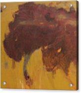 Bison Herd Acrylic Print
