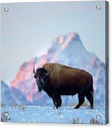 Bison Mountain Sunset Acrylic Print
