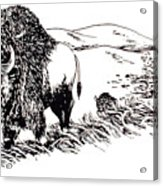 Bison Range Acrylic Print by Jean Ann Curry Hess