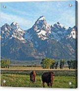 Bison Range Acrylic Print