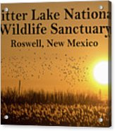 Bitter Lake National Wildlife Refuge Birds, Roswell, New Mexico Acrylic Print