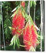 Bittersweet Bloom II Acrylic Print