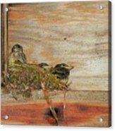 Bitty Birds Acrylic Print