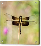 Black And Gold Dragonfly Acrylic Print
