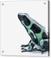 Black And Green Poison Dart Frog Acrylic Print