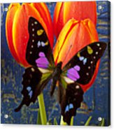 Black And Pink Butterfly Acrylic Print