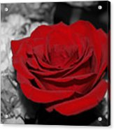 Black And Red Acrylic Print