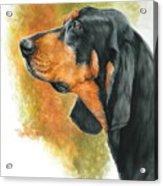 Black And Tan Coonhound Acrylic Print