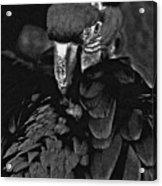 Black And White Bad Ass Bird Acrylic Print