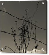 Black And White Barbwire And Branch Acrylic Print
