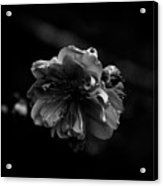 Black And White Bloom Acrylic Print