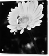 Please Remember I Am A Bee On A Flower Acrylic Print