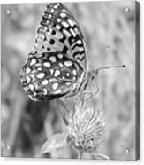 Black And White Butterfly On Clover Acrylic Print
