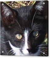 Black And White Cat Acrylic Print