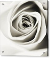 Black And White Delight Acrylic Print
