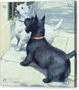 Black And White Dogs Acrylic Print by Septimus Edwin Scott