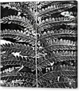 Black And White Fern Acrylic Print