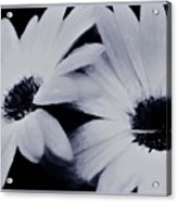 Black And White Floral Art Acrylic Print