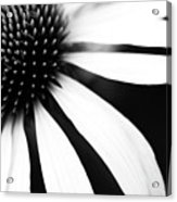 Black And White Flower Maco Acrylic Print