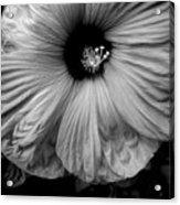 Black And White Hibiscus Acrylic Print