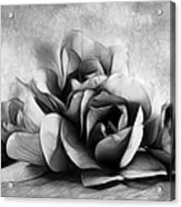 Black And White Is Beautiful Acrylic Print