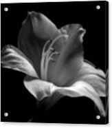 Black And White Lily Acrylic Print by Artecco Fine Art Photography