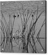 Black And White Marsh Design Acrylic Print