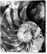Black And White Nautilus Shell By Sharon Cummings Acrylic Print